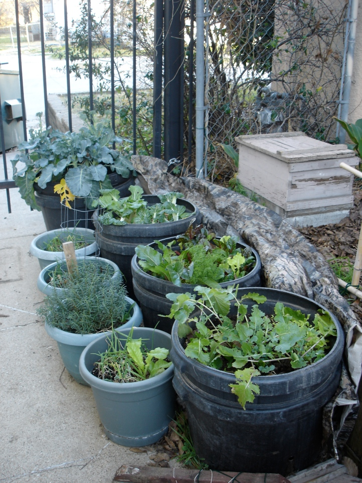 January 2012 container garden